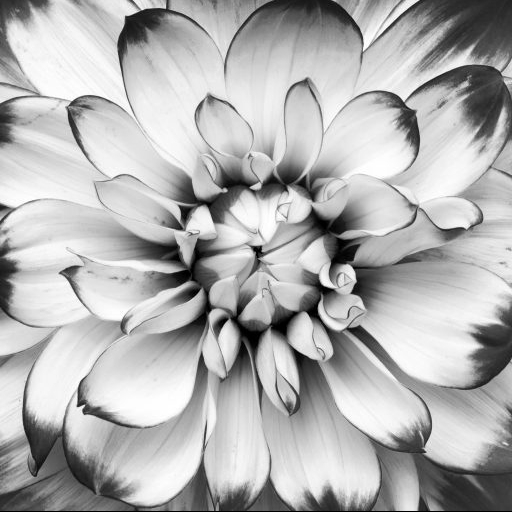 cropped-cropped-flower-black-nd-white