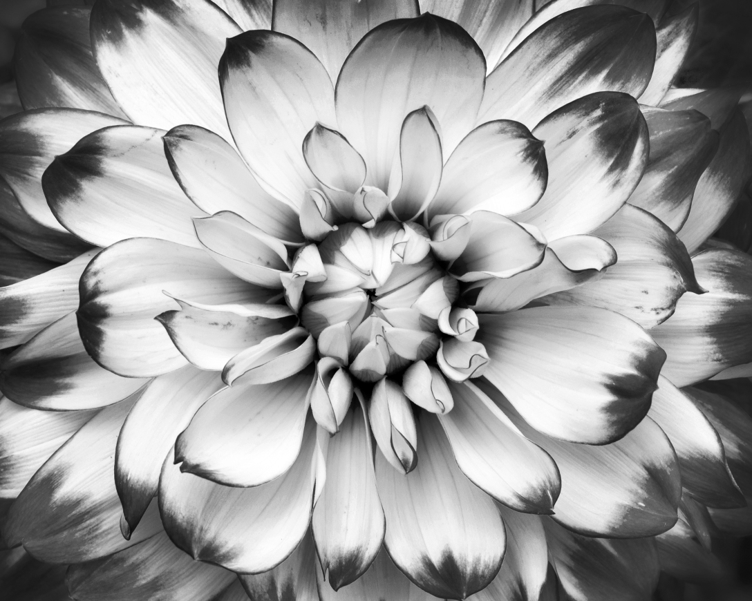 flower black nd white